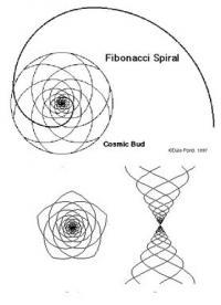Fibonaci Spirale