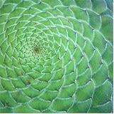 Mandala in Pflanze