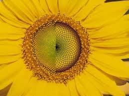 Sonnenblume Mandala Bedeutung